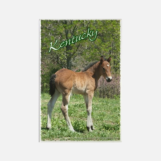 Cute Curly horse Rectangle Magnet