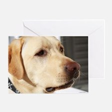 Yellow Lab (photo) Greeting Card