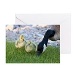 Canada Geese Greeting Cards (Pk of 10)