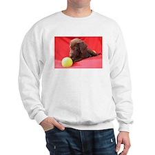 Chocolate Puppy #3 Sweatshirt