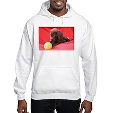 Chocolate Puppy #3 Hoodie