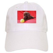 Chocolate Puppy #3 Baseball Cap