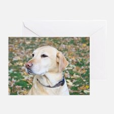 Yellow Lab #2 Portrait Greeting Cards (Pk of 20)