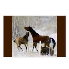 Bratty Colt Postcards (Package of 8)