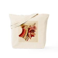 Vintage Anatomy Diagram Tote Bag