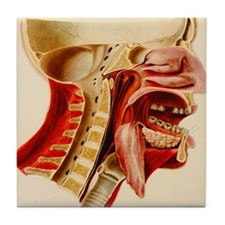 Vintage Anatomy Diagram Tile Coaster