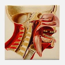 Vintage Anatomy Diagram Tile Coaster