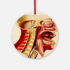Vintage Anatomy Diagram Ornament (Round)
