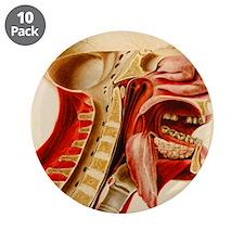 "Vintage Anatomy Diagram 3.5"" Button (10 pack)"
