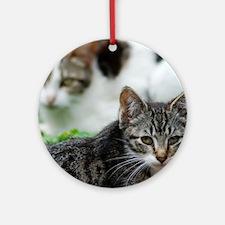 Feral Cat Colony Ornament (Round)