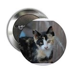 "Feral Cat Colony 2.25"" Button (10 pack)"