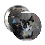 "Feral Cat Colony 2.25"" Button"