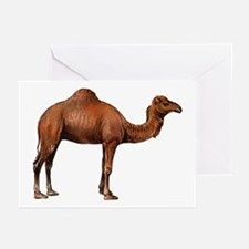 Camel drawing Greeting Cards (Pk of 10)