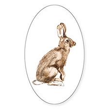 Curious Rabbit Decal