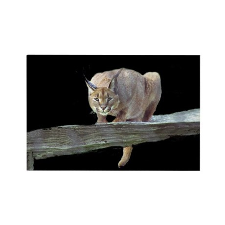 Caracal Cat Crouching Rectangle Magnet