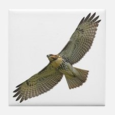 Soaring Red-tail Hawk Tile Coaster