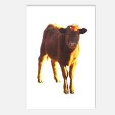 red angus Postcards (Package of 8)