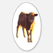 red angus Oval Decal