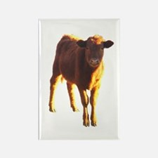 red angus Rectangle Magnet