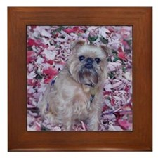 Framed Tile - Brussels Griffon Maple Leaf