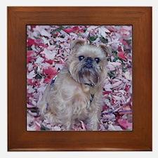 Framed Tile - Brussels Griffon Maple Leaf