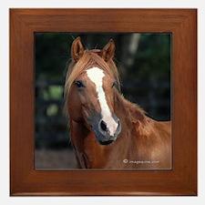 Chincoteague Pony Framed Tile