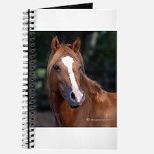 Chincoteague Pony Journal