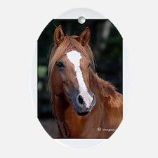 Chincoteague Pony Oval Ornament