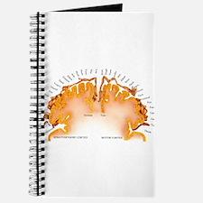 Cute Brain anatomy Journal