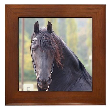 Dakota-Friesian Stallion Framed Tile