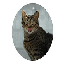 Cat lick Oval Ornament