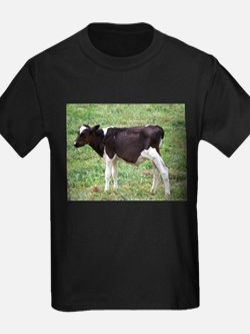 holstein calf T