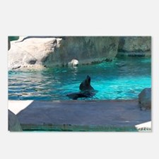 sea lion 4 Postcards (Package of 8)