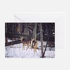 Winter Whitetail Deer Greeting Cards (Pk of 10)