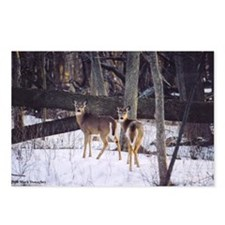 Winter Whitetail Deer Postcards (Package of 8)