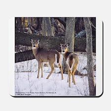 Winter Whitetail Deer Mousepad