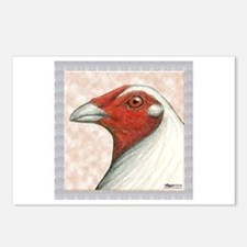 American Gamecock Postcards (Package of 8)