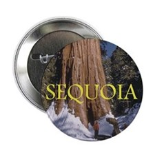 "ABH Sequoia 2.25"" Button"