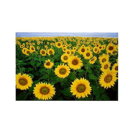 Sunflower Field Rectangle Magnet