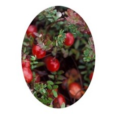 Cranberry Oval Ornament