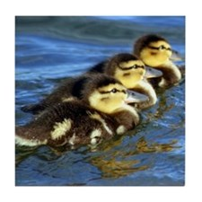Duckling Trio Tile Coaster