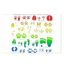 Rainbow 3D Animal Tracks Postcards (Package of 8)