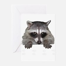 Raccoon and Tracks Greeting Cards (Pk of 20)