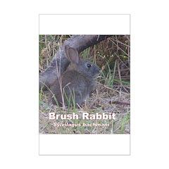 Brush Rabbit Posters
