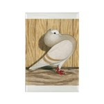 Khaki Mookee Pigeon Rectangle Magnet (10 pack)