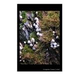 Stump Moss and Mushroom Postcards