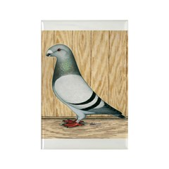 Show Racer Pigeon Rectangle Magnet (100 pack)