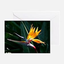 Bird of Paradise Greeting Cards (Pk of 10)