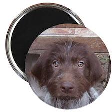 GWP Rescue Puppy Magnet