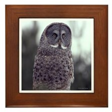 Framed Tiles featureing Great Grey Owl